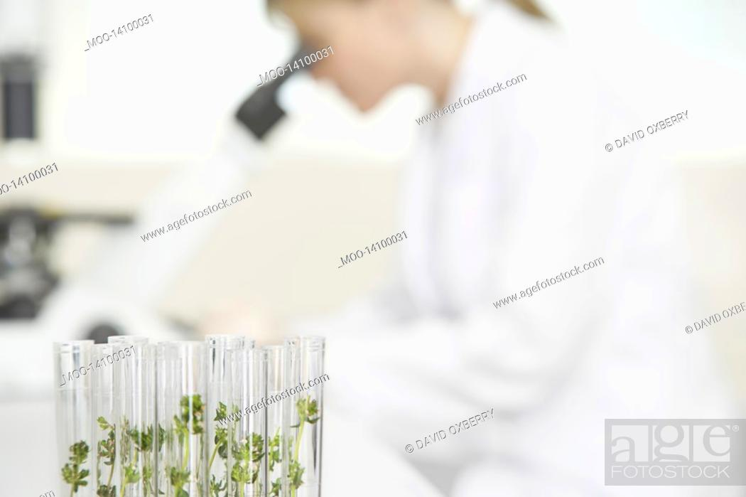 Stock Photo: Scientist using microscope in laboratory focus on plants in test tubes in foreground.