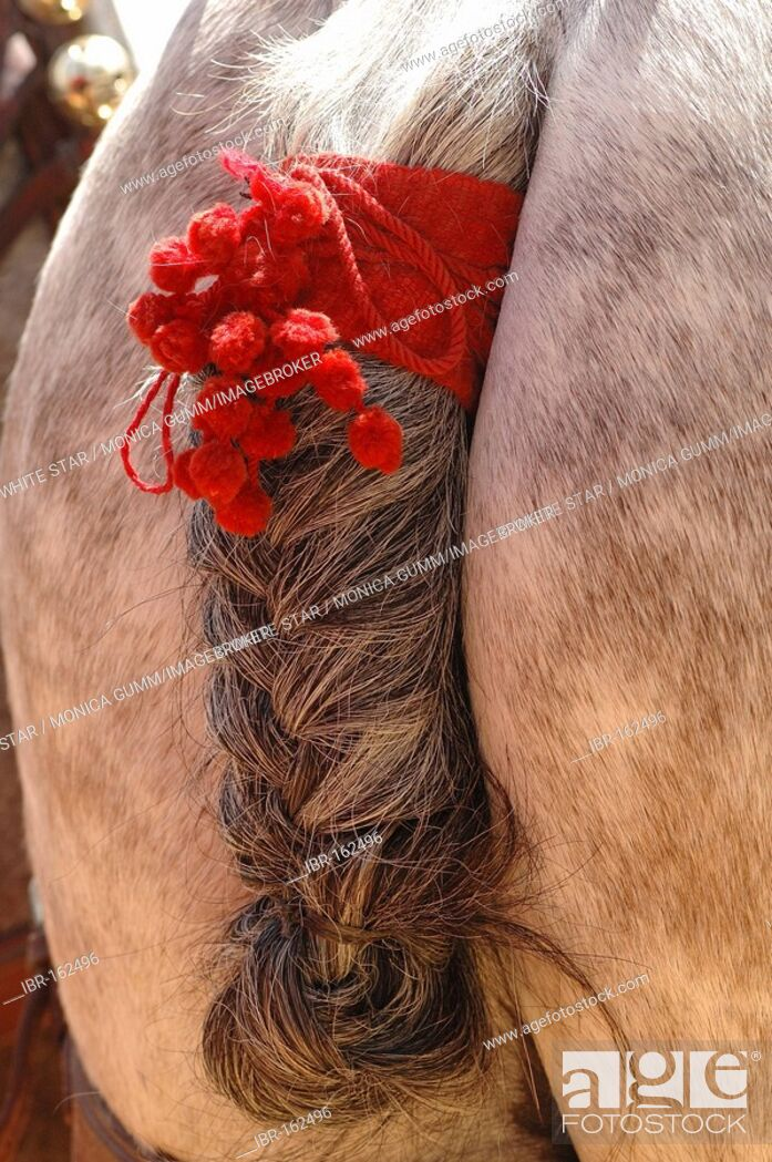 Stock Photo: Decorated horse , Feria de Caballo , Jerez de la Frontera , Cadiz , Andalusia , Spain , Europe.