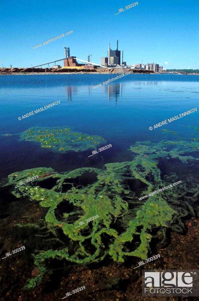 Stock Photo: Alga in water, Sweden.