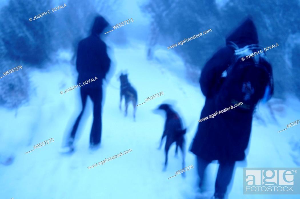 Stock Photo: Walking dogs in early morning, Rim Trail, Grand Canyon. Arizona, USA.