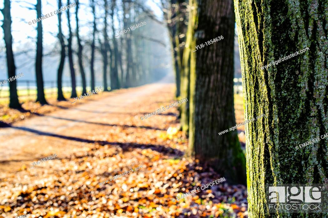 Stock Photo: avenue of trees in late autumn, ispra, Lombardy, Italy.