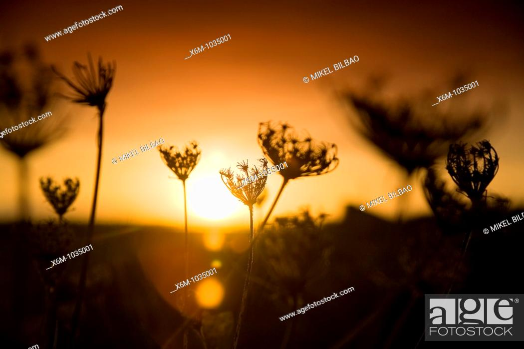 Stock Photo: meadow and plants at sunset  Liencres, Cantabria, Spain.