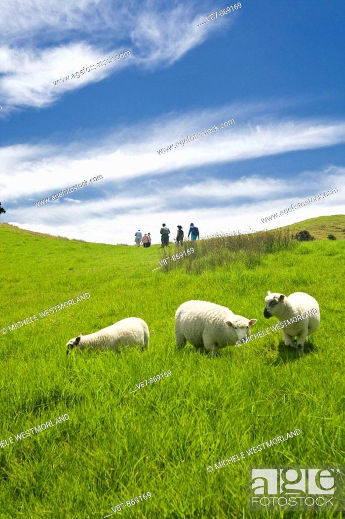 Stock Photo: Hike on Urupukapuka Island where Zane Grey had a fishing base  Bay of Islands, North Island, New Zealand.