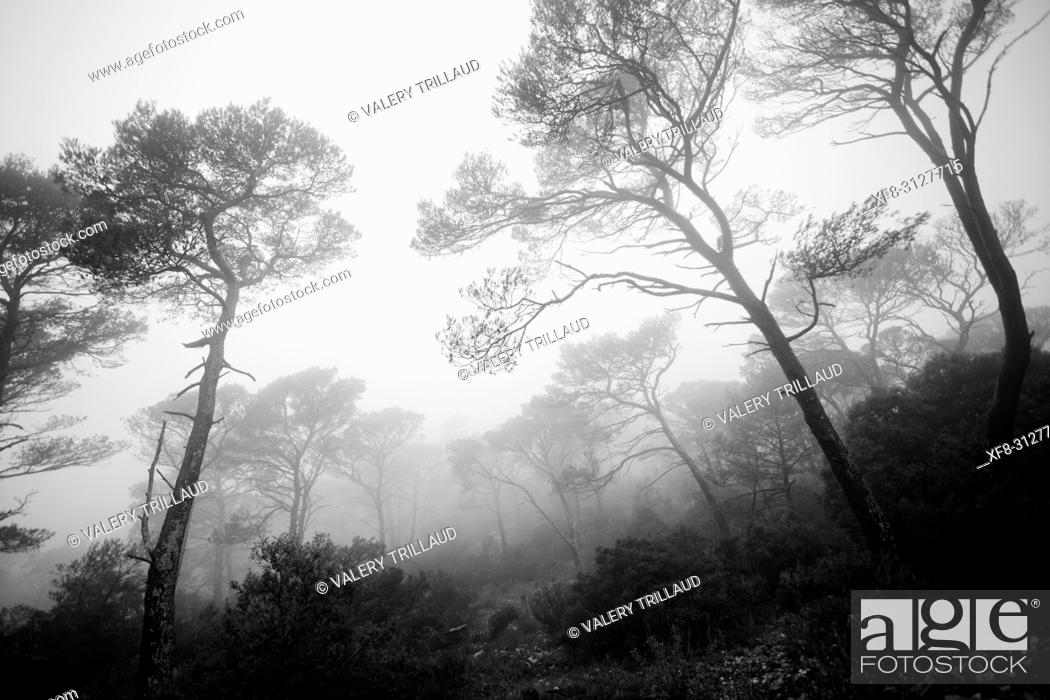 Stock Photo: Foret dans la brume, Var, PACA.