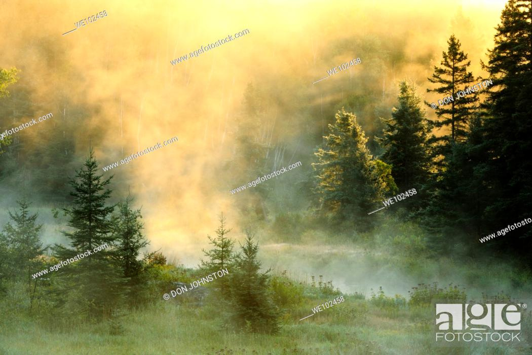 Stock Photo: Morning mists on Junction Creek.
