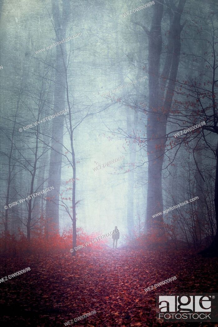 Stock Photo: Germany, silhouette of man walking on forest track in fog.