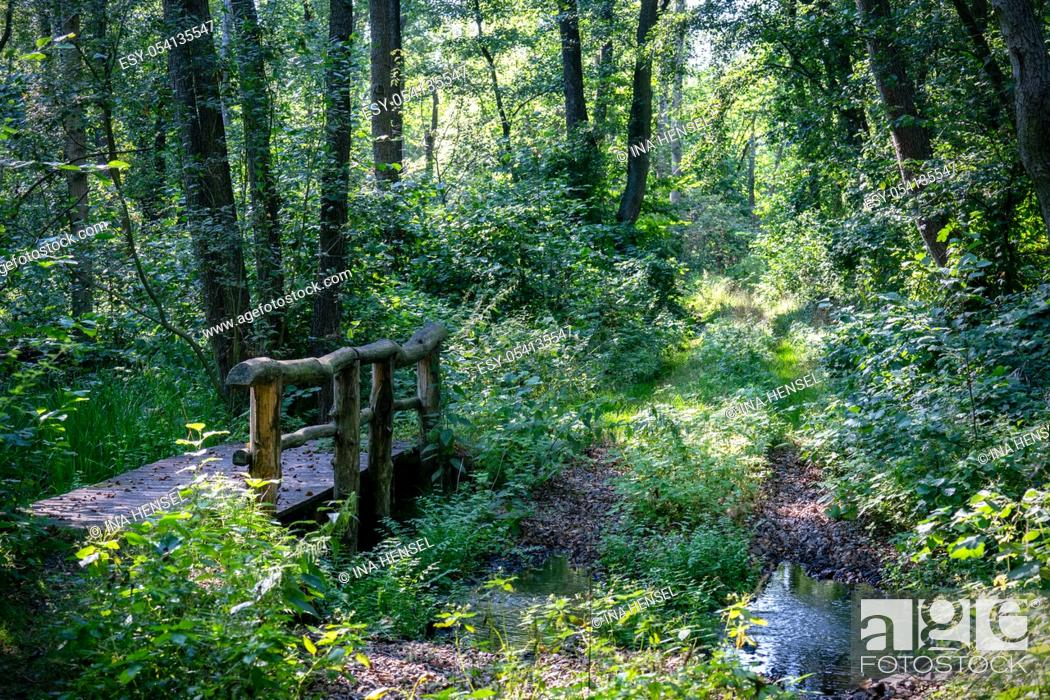 Stock Photo: A wooden bridge crossing a small stream in a very lush green forest with rays of sunshine through the trees in nature reserve Zarth near Treuenbrietzen.