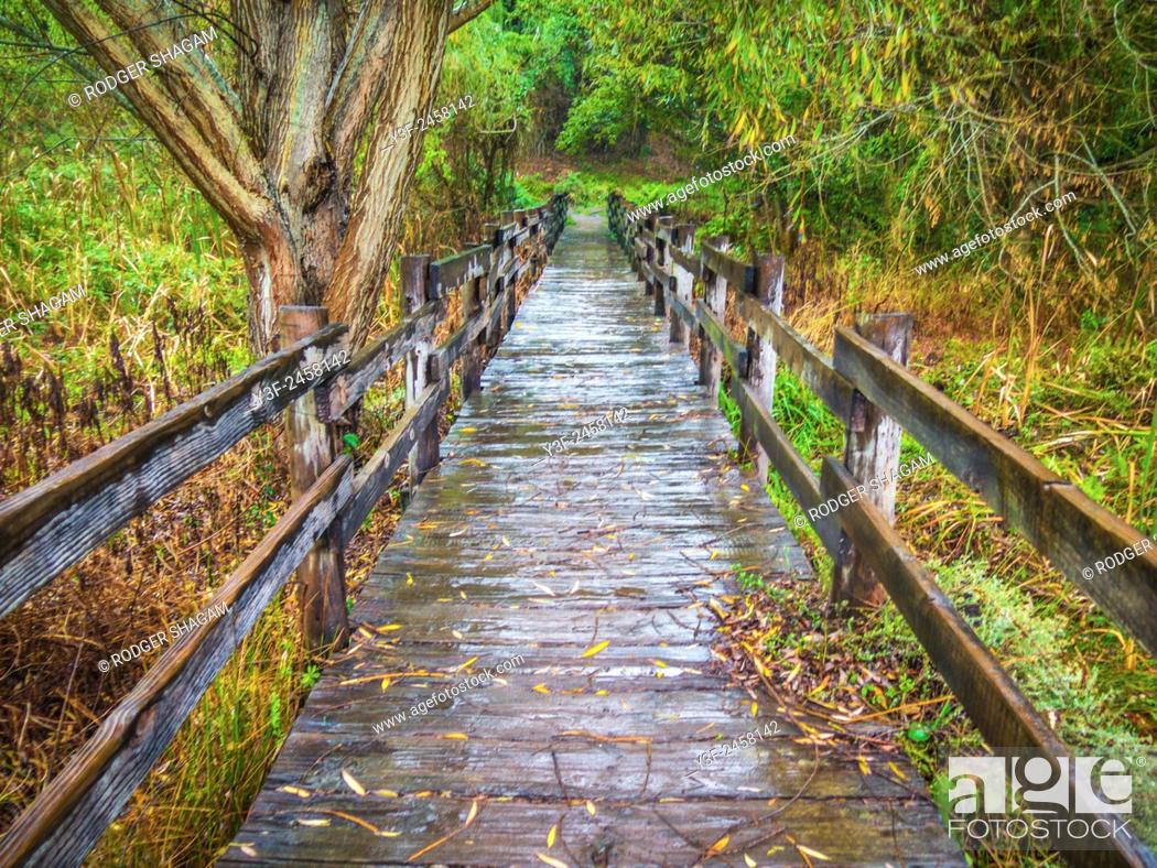 Imagen: A wooden bridge crosses a wetland in the countrfyside. Cape Town, SOuth Africa.