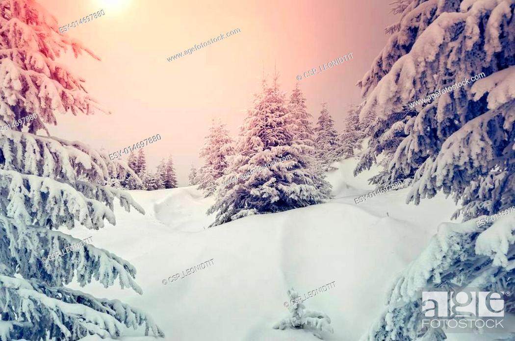 Stock Photo: wonderful winter landscape.