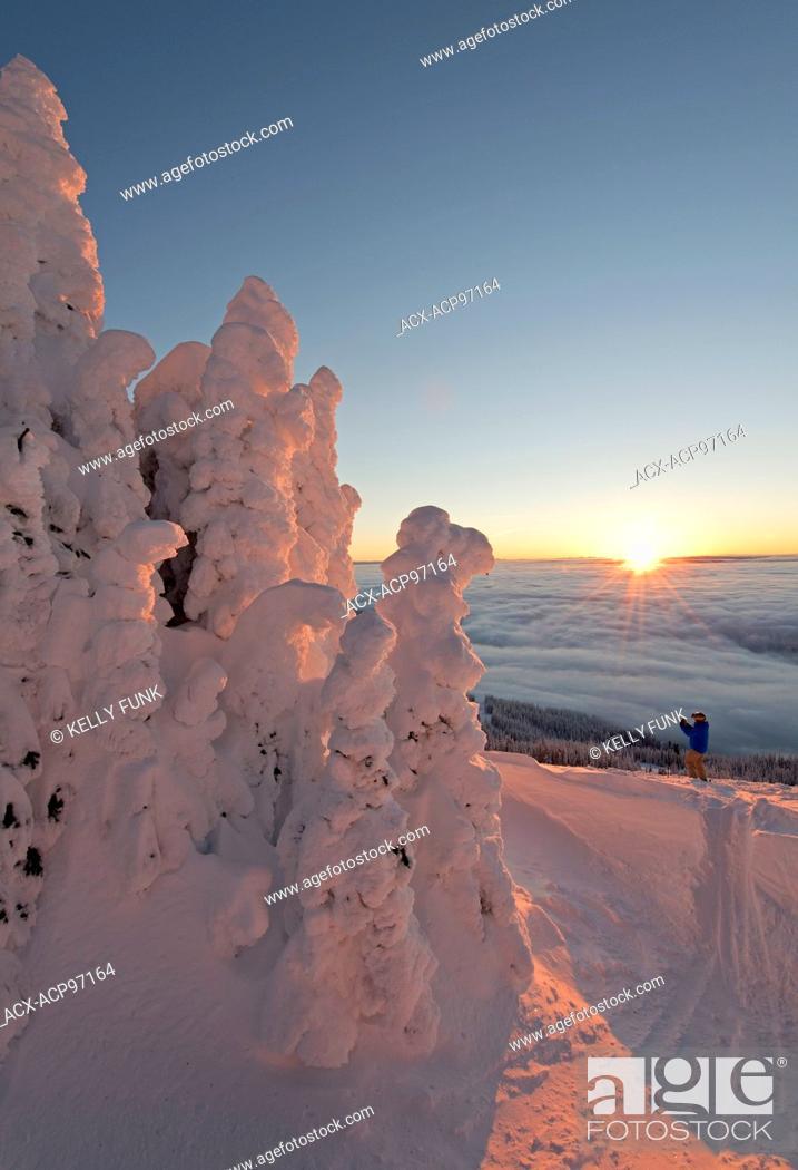 Photo de stock: A skier among snow ghosts creates a beautiful environment at sunrise at the top of Sun Peaks Resort, Thompson Okangan region, British Columbia, Canada.