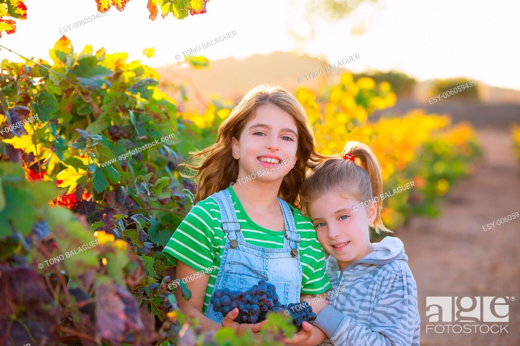 Stock Photo: sister kid girs farmer hug in vineyard harvest in mediterranean autumn field at sunset.