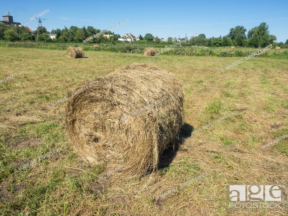 Stock Photo: Round bales are harder to handle than square bales but compress the hay more tightly.