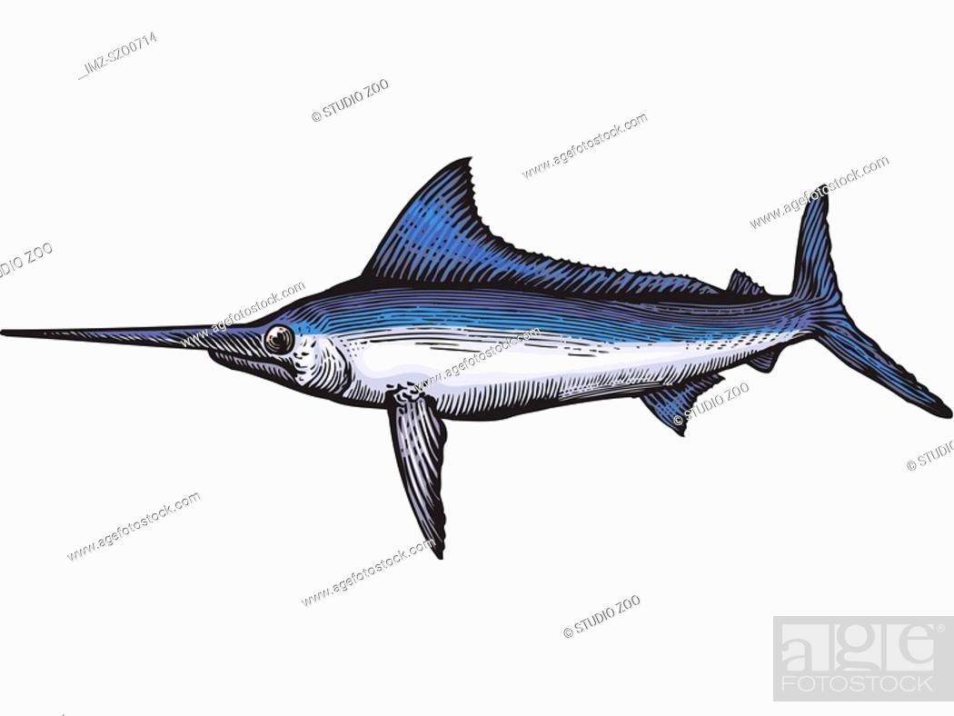 Stock Photo: A drawing of a marlin.