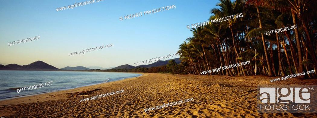 Stock Photo: Beach with palm trees.