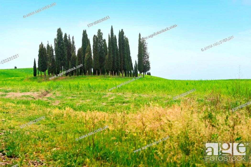 Stock Photo: Beautiful spring minimalistic landscape with Italian Cypress on the green hills in Tuscany countryside, Italy.