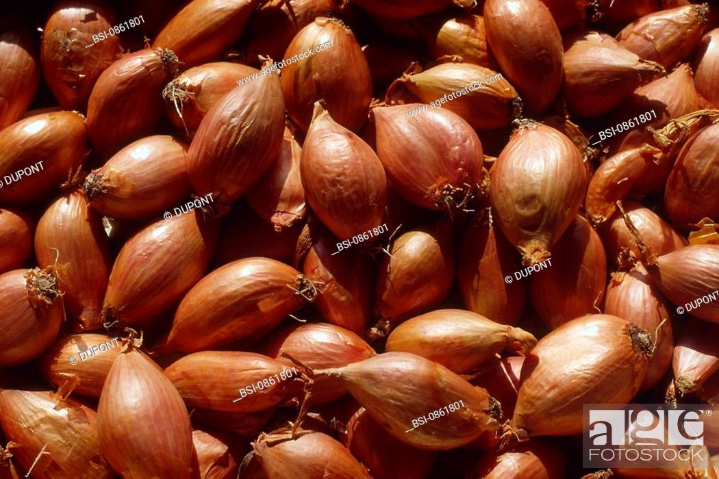Stock Photo: SHALLOT.