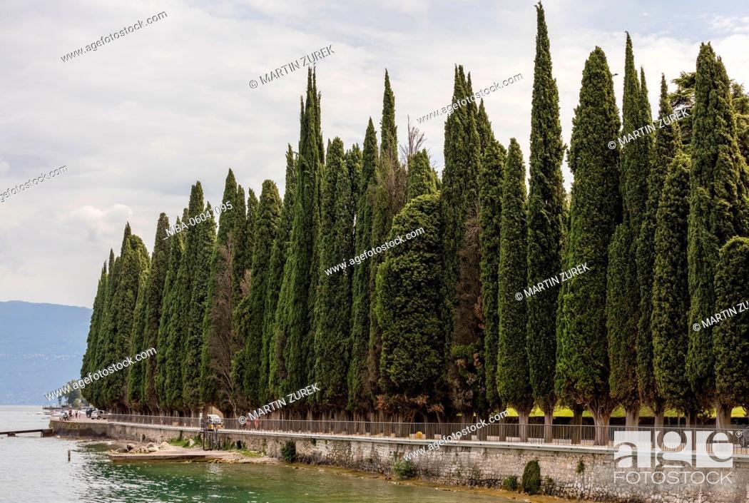 Stock Photo: avenue of cypresses on the south shore close Salo, Italy, Lake Garda.