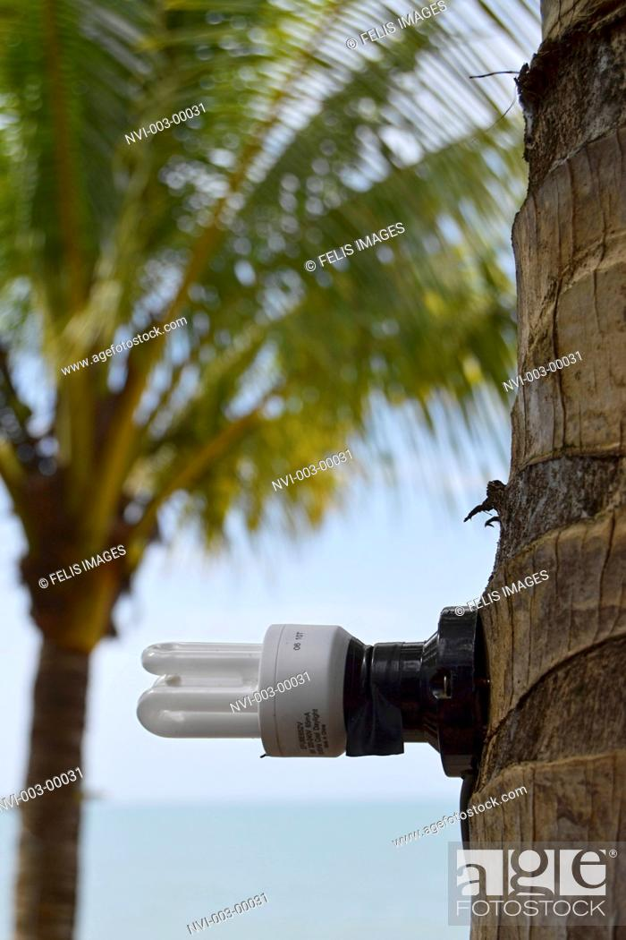 Stock Photo: Energy saving lamp, screwed on palm tree, Koh Kho Khao Iceland, Southern Thailand, Thailand, Southeast Asia.
