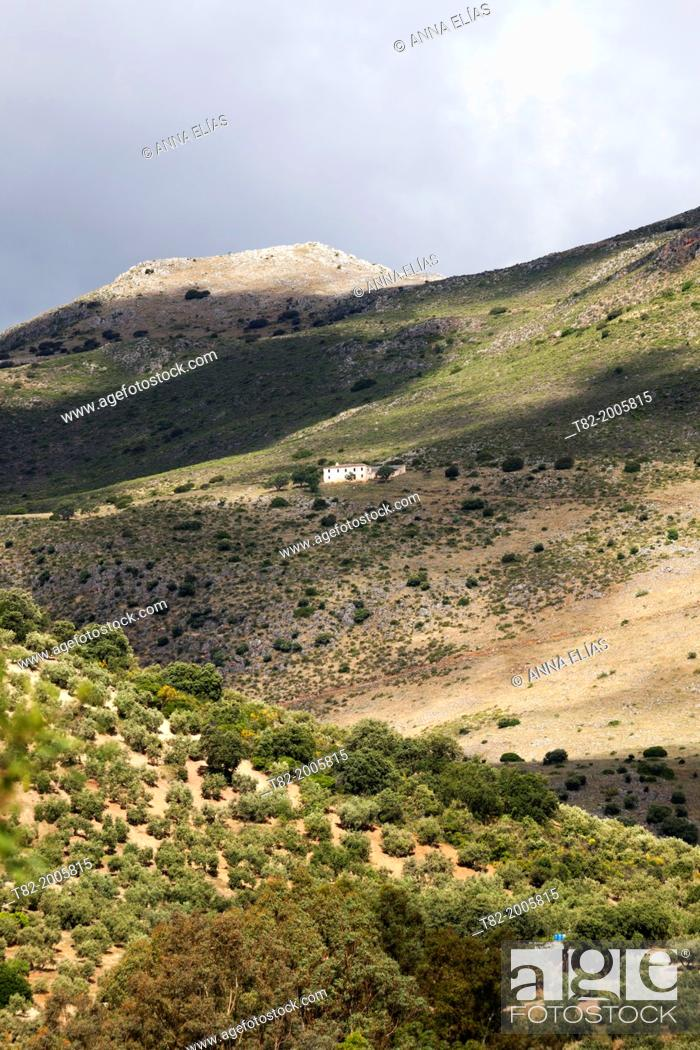 Stock Photo: Andalusian mountain landscape with cottage and olive, Zagrilla, Cordoba, Andalucia, Spain, Europe.