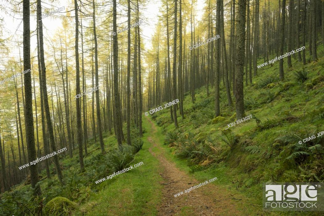 Stock Photo: A path though Holme Wood in Autumn near Loweswater in the Lake District National Park, Cumbria, England.