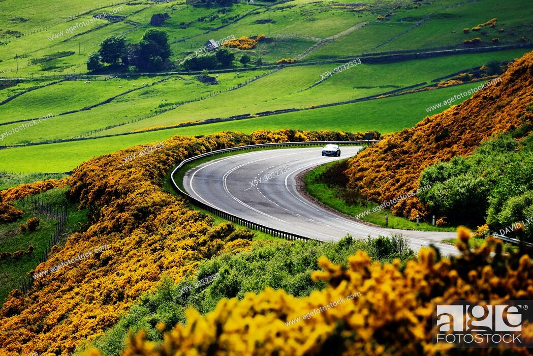 Stock Photo: A9 main trunk road climbs 2 miles north of Helmsdale, Sutherland on Scotlands N. E. coast. Looking south over early summer yellow gorse and farmland.