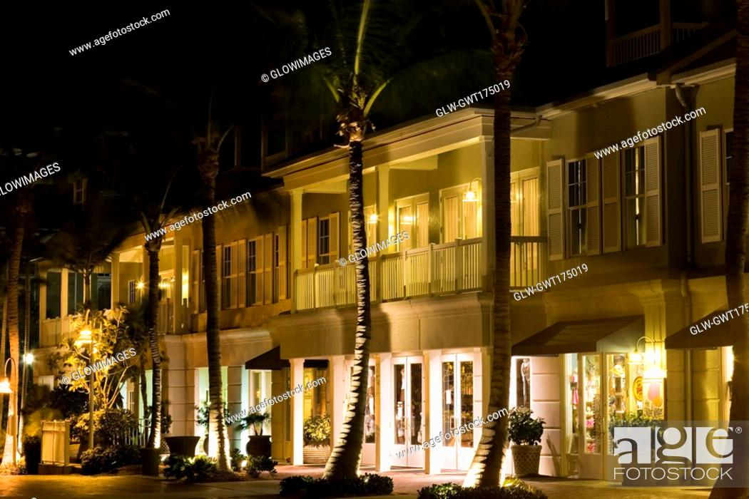 Stock Photo: Palm trees in front of a house, Key West, Florida, USA.