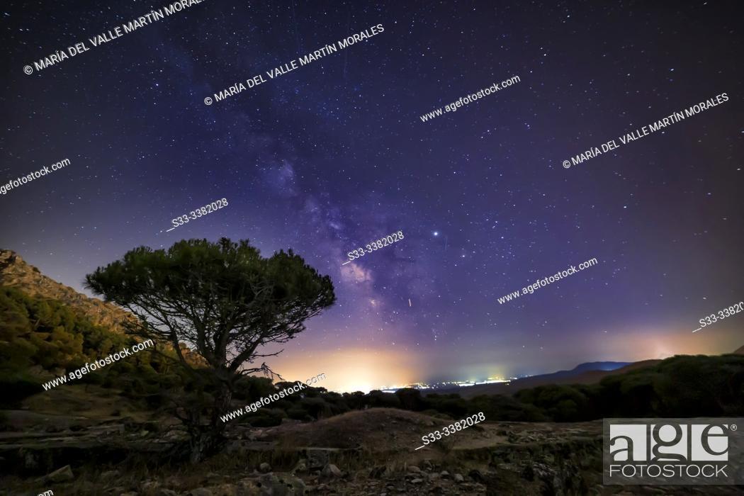 Stock Photo: Milky Way over Concejo pinewood in Cadalso de los Vidrios. Madrid. Spain. Europe.