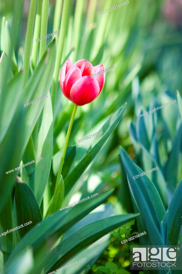 Stock Photo: garden in spring time.