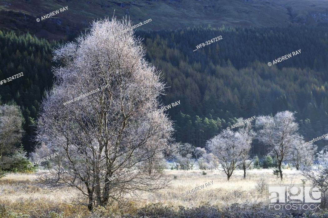 Stock Photo: Frost covered tree's illuminated by early morning sunlight captured on a bitterly cold October morning at Glen Goil in the Loch Lomond and Trossachs National.