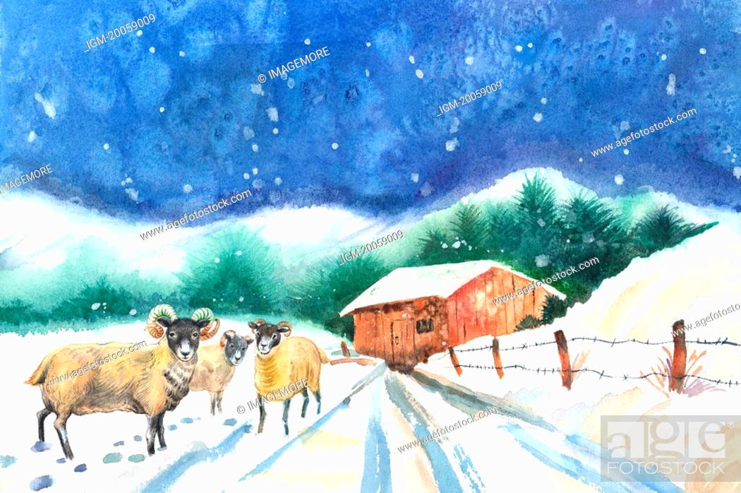Stock Photo: Animal, Watercolor painting of sheep standing on the snow.