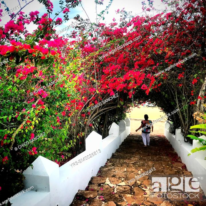 Stock Photo: A Mexican woman walks in a tunnel of flowers in Ticul, Yucatan, Mexico.