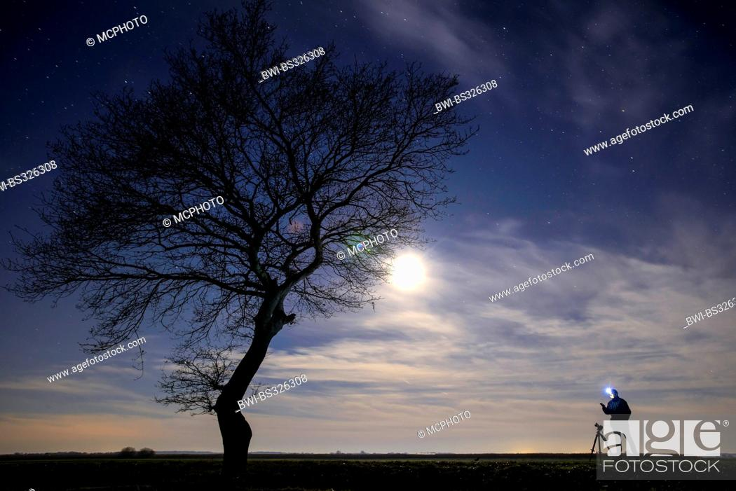 Stock Photo: single tree and photographer in moonlight.