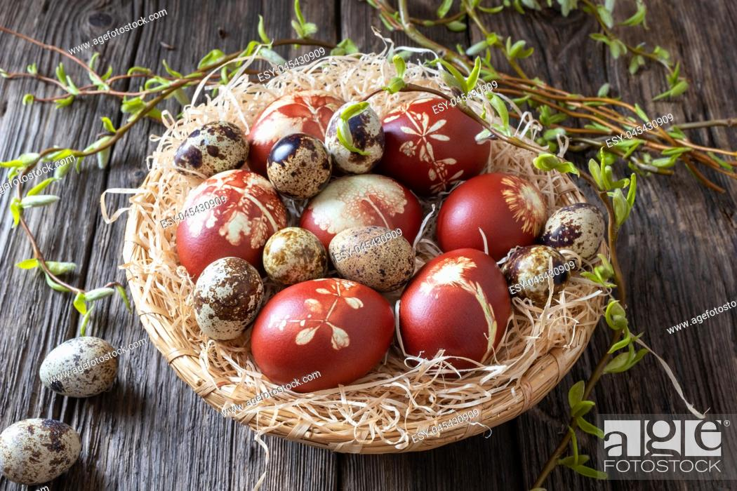 Stock Photo: Quail and Easter eggs dyed with onion peels with a pattern of fresh herbs in a wicker basket.