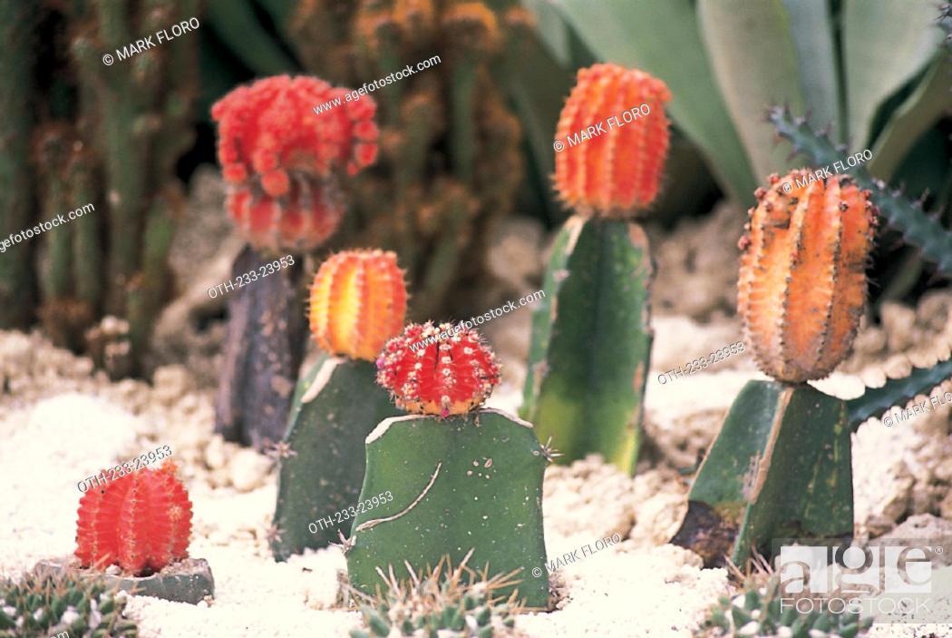 Imagen: Cactus.