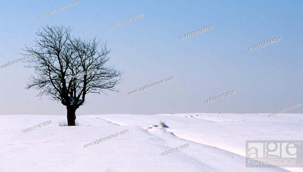 Stock Photo: weinviertel, austria, blanket of snow, branches, calf, cold.