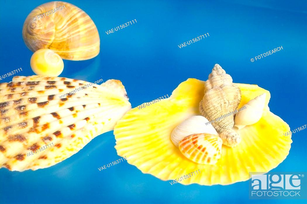 Stock Photo: mollusks, scallop, mollusk, animal, shellfish, mollusc, shell.