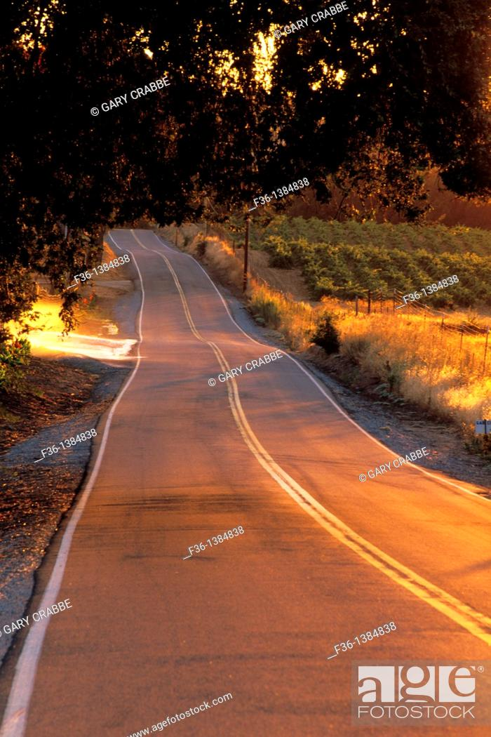 Stock Photo: Road at sunset through vineyards near Plymouth, Shenandoah Valley, Amador County, California.