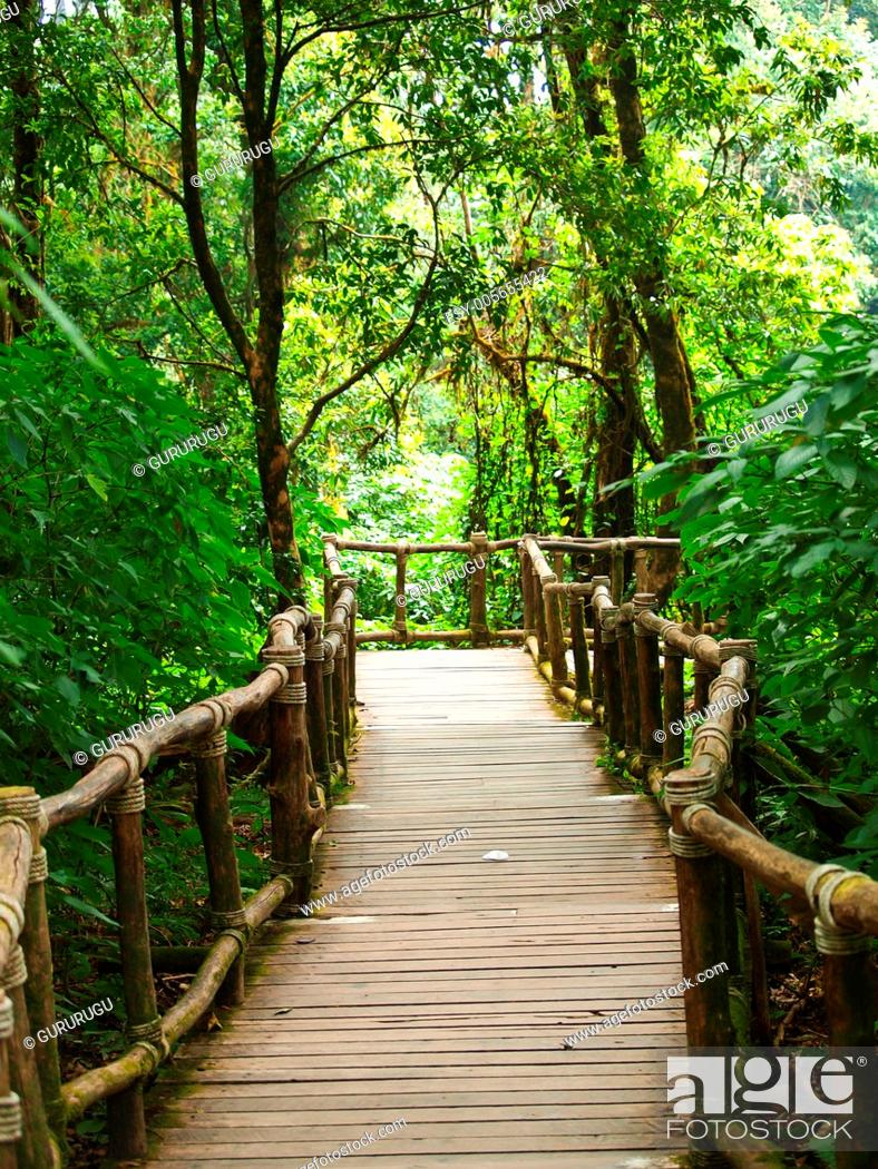 Stock Photo: Wooden path way among the forest in Doi Inthanon in Chiang Mai, Thailand.