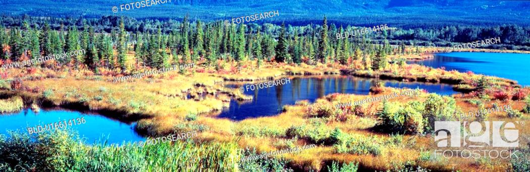 Stock Photo: landscape, river, scenery, tree, lake, panorama.