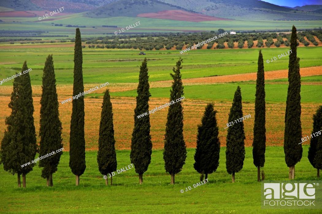 Stock Photo: Landscape near Santa Cruz de Mudela, Ciudad Real province, Castilla-La Mancha, Spain.