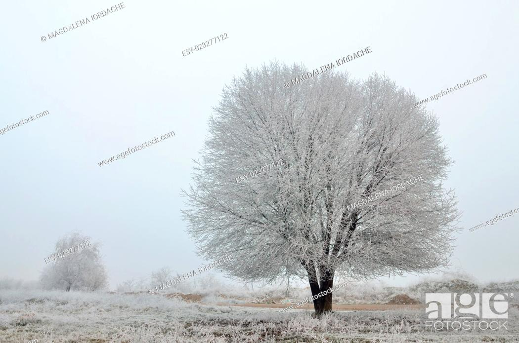 Stock Photo: Frozen tree in winter field.