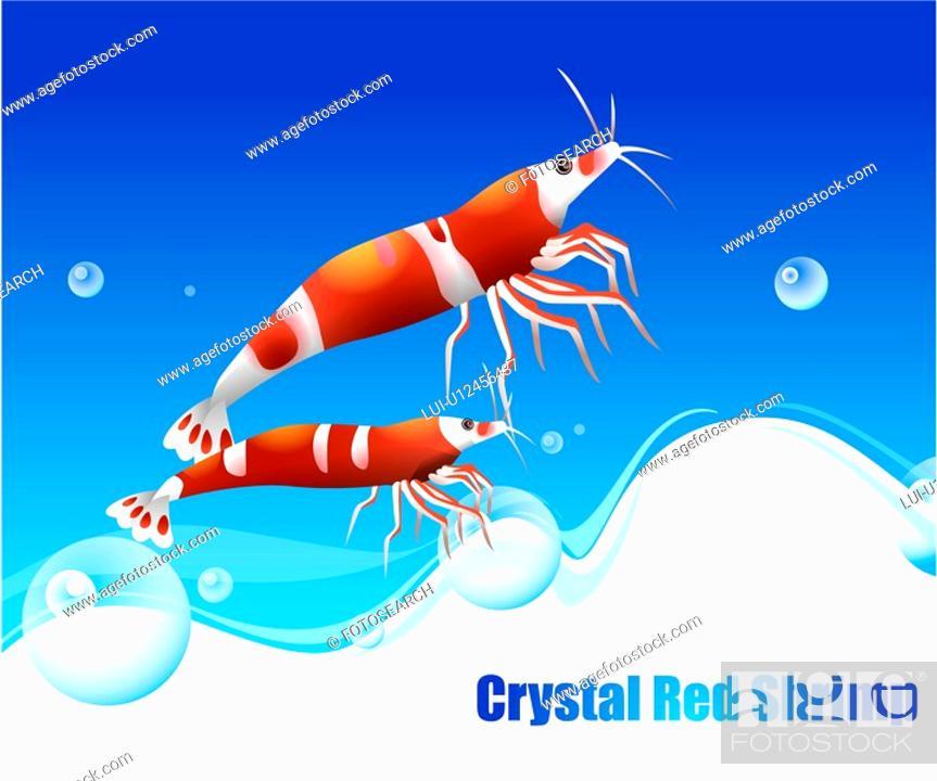 Stock Photo: underwater, Angelfish, undersea, ocean, sea, CrystalRedShrimp.