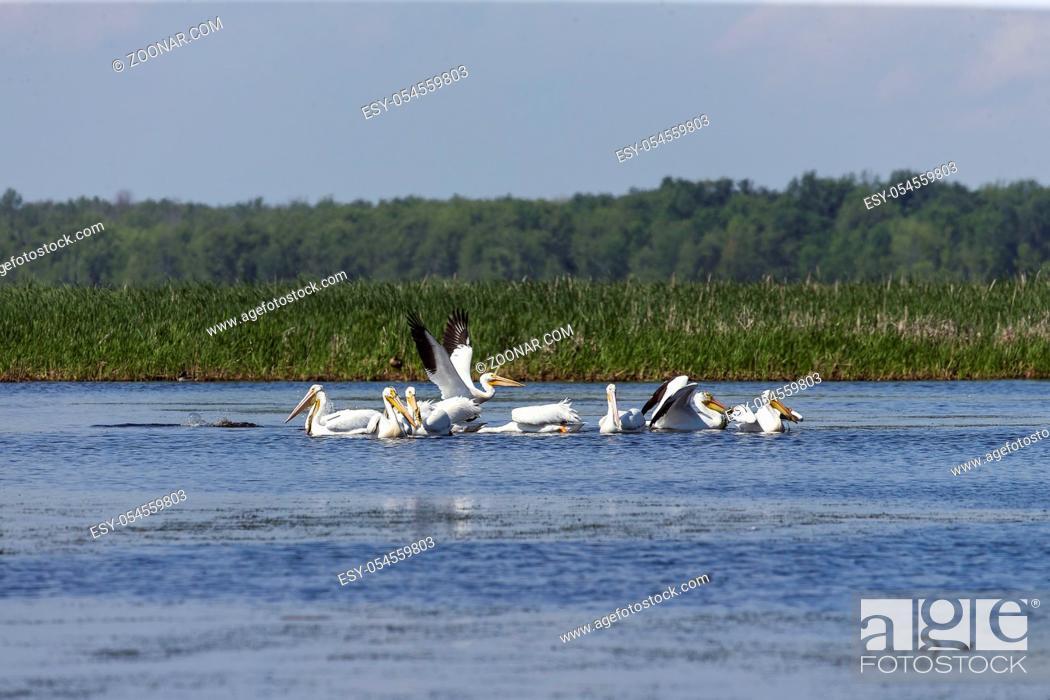 Stock Photo: Nature scene from wisconsin.
