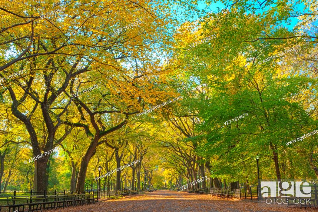Stock Photo: Literary Walk in Autumn colors, Central Park.