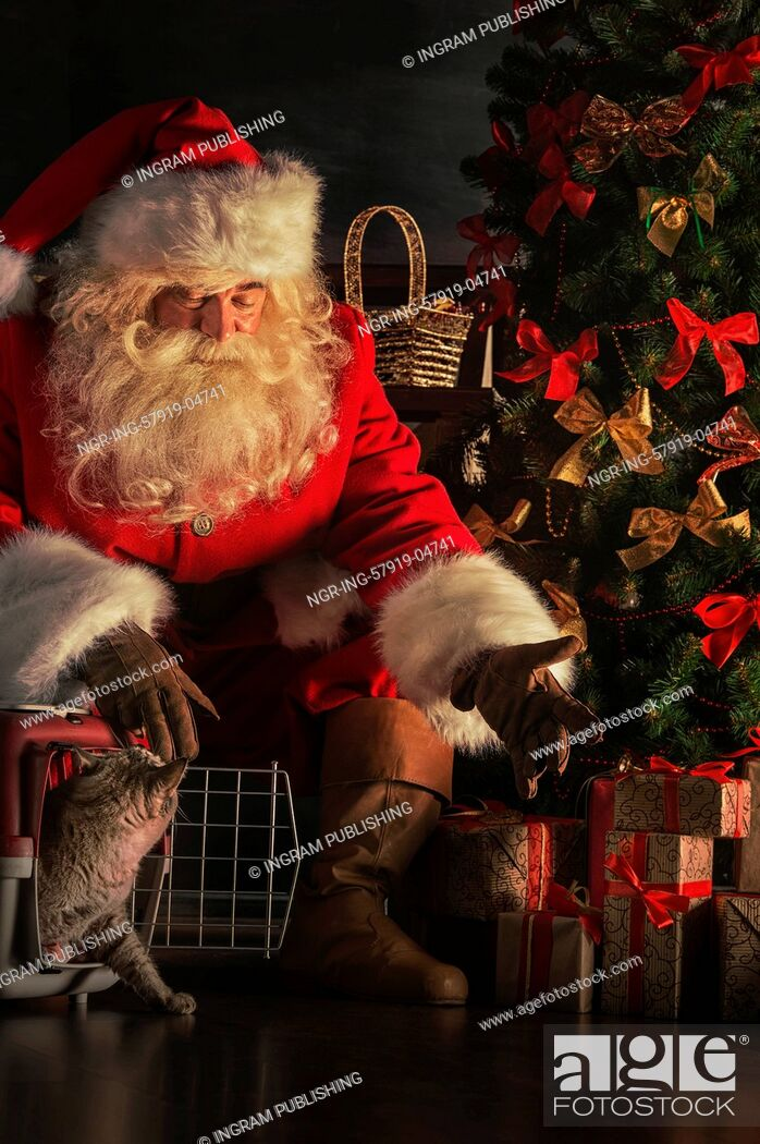 Stock Photo: Santa Claus making a most wanted gift to a child - he gives tabby cat to new owners. Santa placing cute cat near Christmas tree.