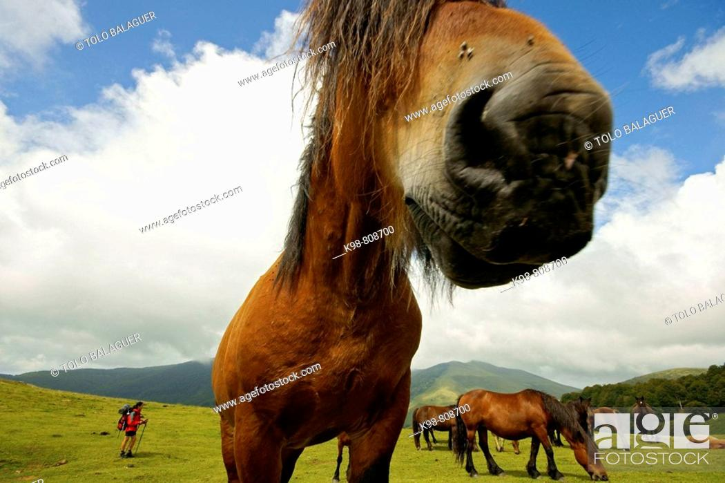 Stock Photo: Horses, Arbilleta pass, Navarra, Spain.