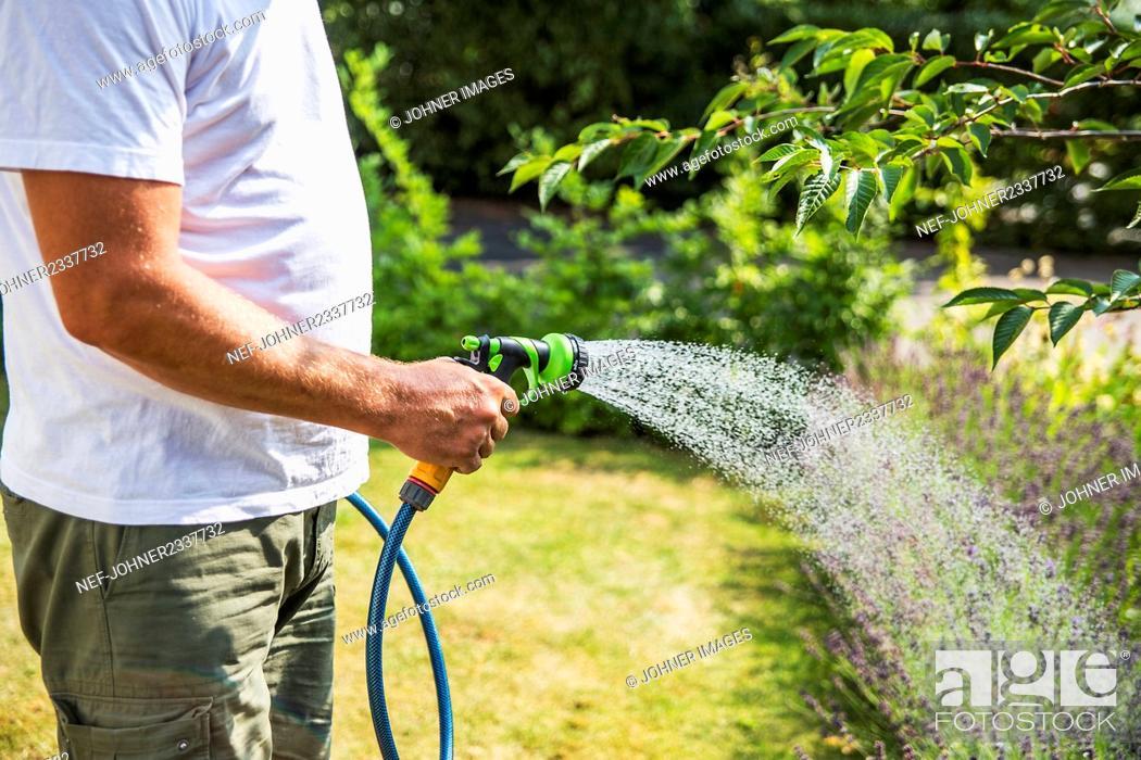 Stock Photo: Man watering garden.