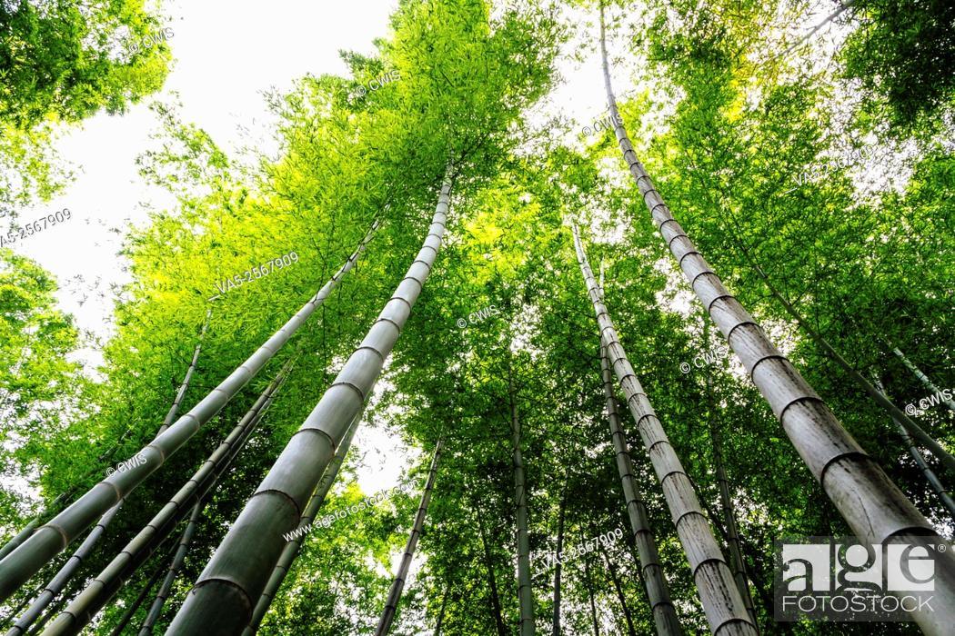 Stock Photo: Yibin, Sichuan province, China - Beautiful view at Shunan Bamboo Sea national park.
