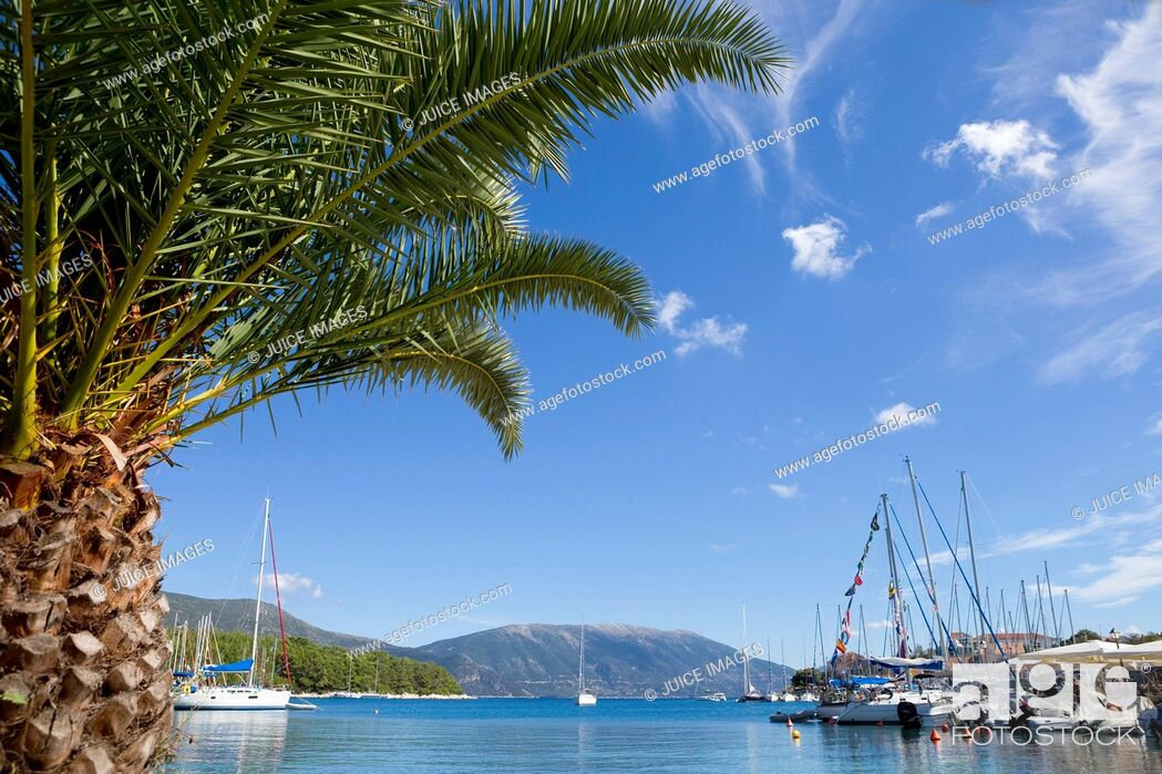 Stock Photo: Greece, Kefalonia, Fiskardo, view of palm tree and boats in harbour.
