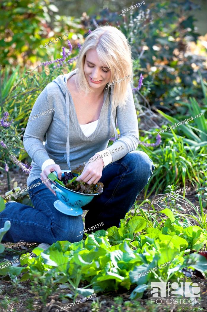 Stock Photo: 21 year old blond woman harvesting lettuce in a garden.